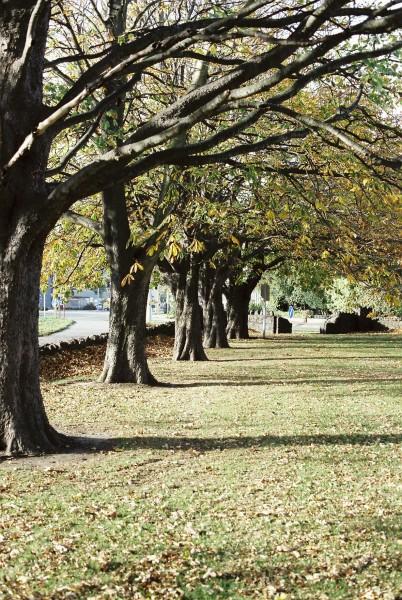 Park Trees Autumn
