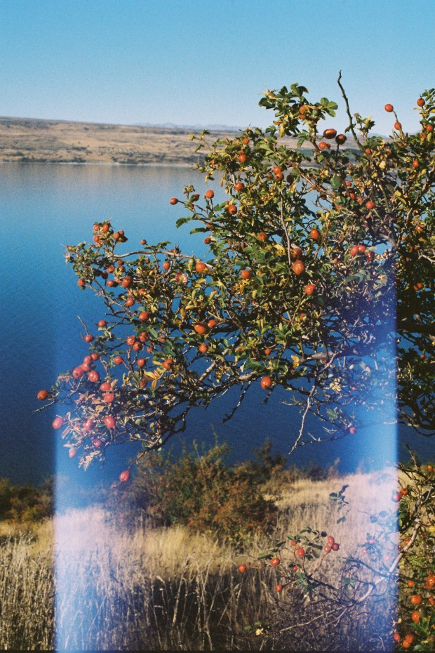 Lake, Rose Hips and Light Leaks