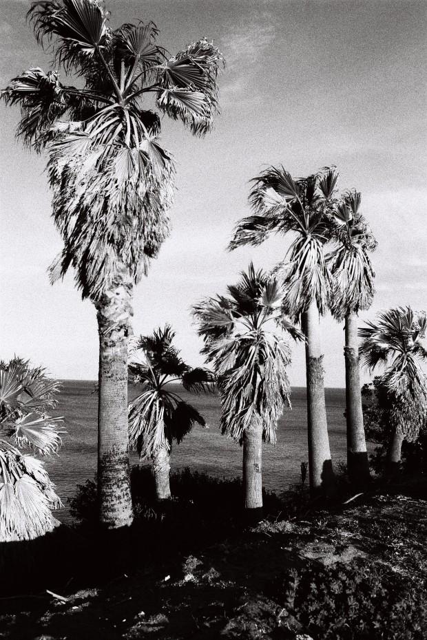 Newcastle Palms
