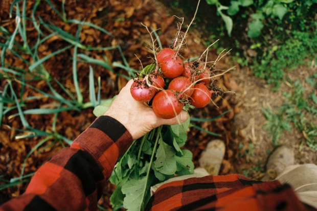 Pick radishes, push portra